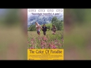 Цвет рая (1999) | Rang-e khoda