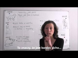 Polish for foreigners - idiomy ze zwierzętami