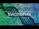 САМЫЕ ВАЖНЫЕ ИДЕИ ОБ ЭВОЛЮЦИИ КОВЧЕГ ИДЕЙ Александр Марков