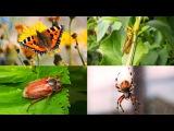 МУЛЬТИК ПРО НАСЕКОМЫХ для детей Звуки животных развивающее видео Слушать онлайн