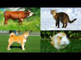 МУЛЬТИК ПРО ДОМАШНИХ ЖИВОТНЫХ для детей Звуки животных развивающее видео Слушать онлайн