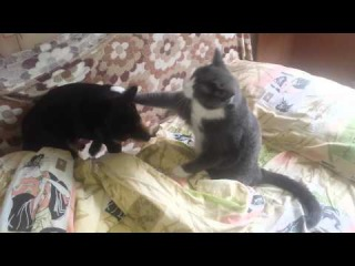 Кот боксёр и пёс задира.
