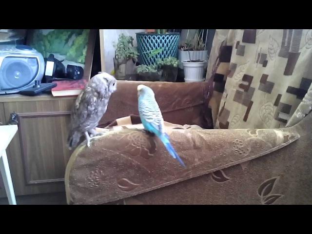 Сыч Кузя и попугай Петя