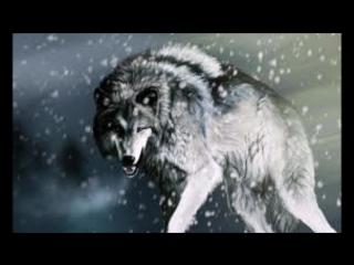 На композицию из группы Комиссар Волчья кровь