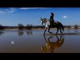 Roni Benise &amp David Arkenstone - Quiver Bliss