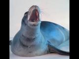 Любимые Животные в Instagram  «Вы слышали когда-нибудь рёв тюленя ? Самые милые и забавные видео с животными только у нас  pets_