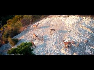 Виртуальная экскурсия по Сафари-Парку Геленджика. Видео и эросъемка