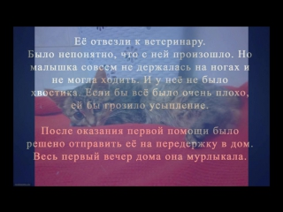 Кошечка с аэродрома 1.01.17