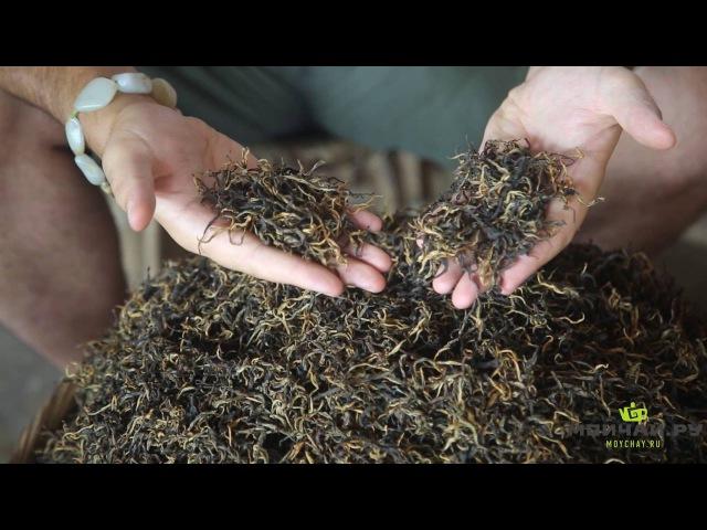 Определение качества чая. Основные факторы, влияющие на качество чая.