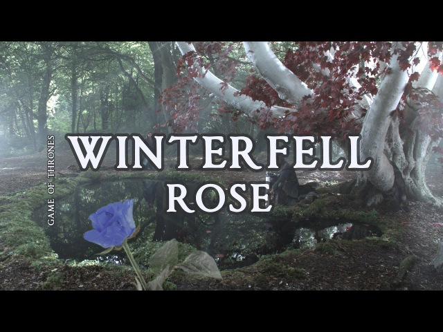 The Starlings - Winterfell Rose (Game of Thrones)