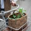 Дарите Живое! - Городской Обмен Растениями