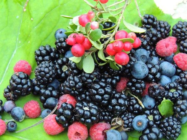 В Нюрбе за сбор ягод придумали незаконные штрафы