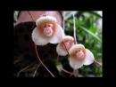 Exotic flowers. Экзотические цветы.