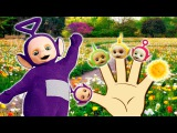 Teletubbies Finger Family  Nursery Rhymes Lyrics and More