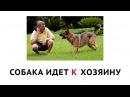 Учим предлоги в русском языке. Для детей 3-4 лет. Развивающий мультфильм для самых...