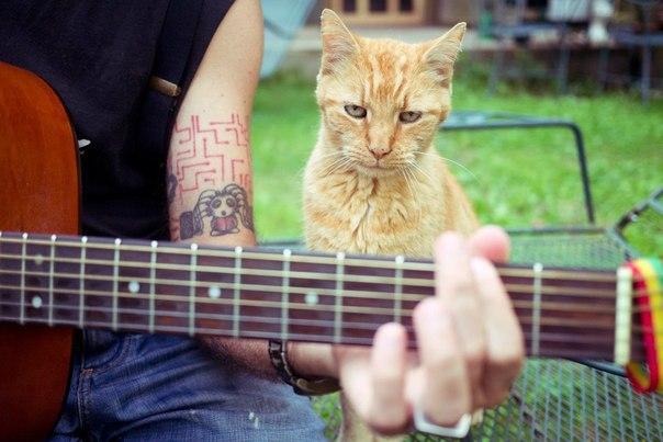 Без кота и жизнь не та песня