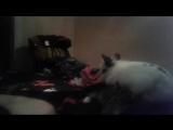 Кролик педафил(((