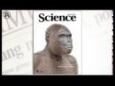 Инволюция от человека к обезьяне А И Белов