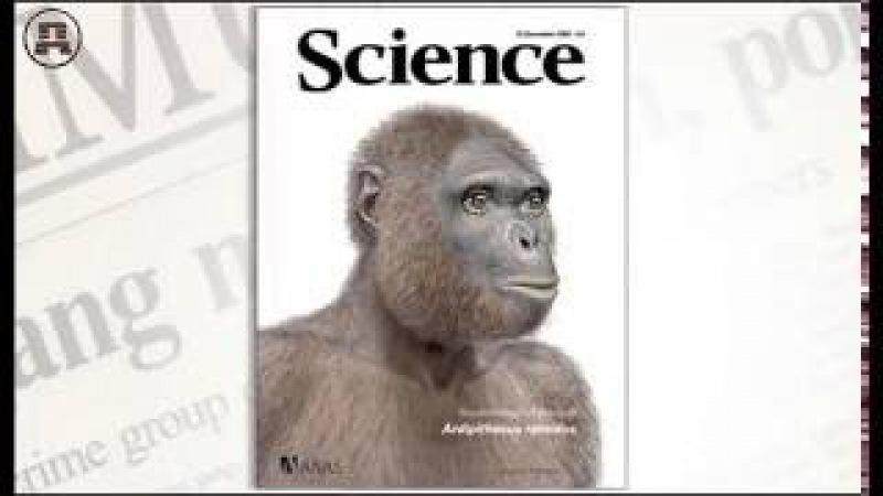 Инволюция: от человека к обезьяне. А.И.Белов