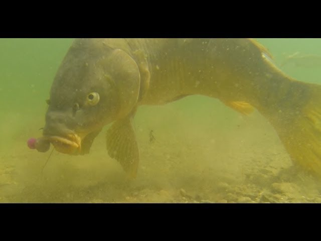 Karpfen[angeln] Unterwasser