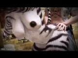 Savannah Exploration zebra yiff