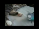 Попугай разговаривает с котом!!