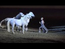 Liberty with 3 horses - Sylvia Zerbini - Night of the Horse 2016 - Del Mar National Horse Show