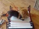 WWE - кошайчий реслинг
