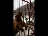 Дрессированный мишка в зоопарке