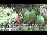 Нейлоновое Сердце - Лев Барашков - With lyrics