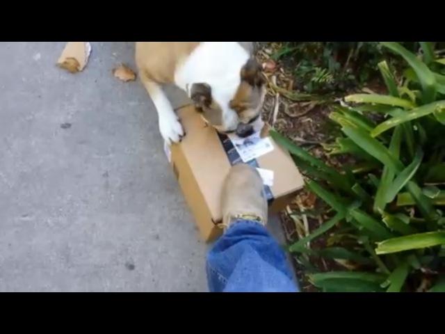 Когда долго ждал посылку с почты