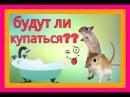 Мышка и Мишка будут ли купаться