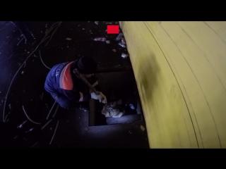 В Ярославле спасатели вытащили из ямы собаку, пугавшую воем местных жителей