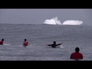 Ballenas y surfistas compartiendo olas perfectas en tahiti