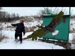 На моего персонажа пытается напасть орел, им управляет призрак