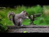 Животные в экшн-сценах