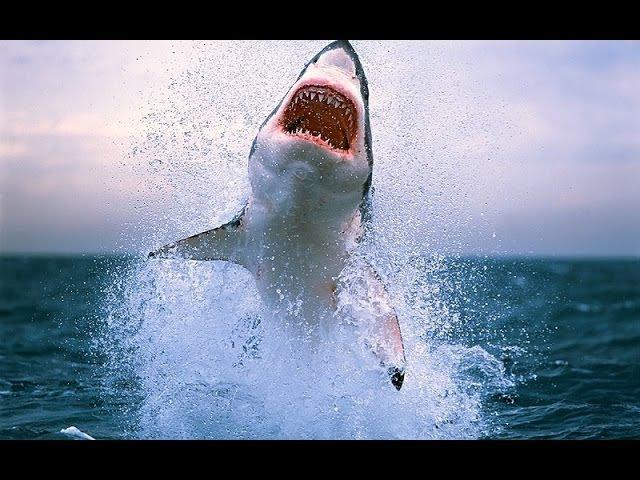 Дикая природа. Опасные животные океана lbrfz ghbhjlf. jgfcyst bdjnyst jrtfyf
