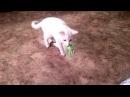 Пушистик Байла и кот Басс