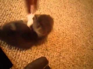 Приколы ! Няшный котенок