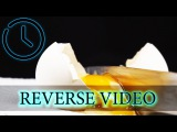Reverse Video Egg. Lemon. Orange juice.