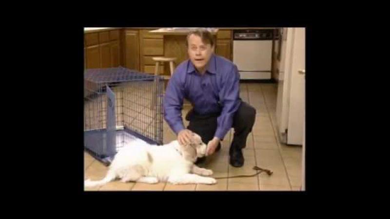 Обучающий фильм Midwest Как с помощью клетки справиться с поведенческими проблемами собак