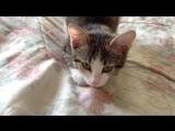 ШОК! Кот убийца добрался до меня!!!