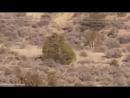 Raw Mysterious 'man like creature' filmed in Portuguese desert - YouTube