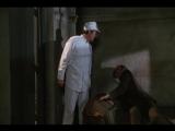 Дракула: Мертвый и довольный / Dracula: Dead and Loving It / Жанр: ужасы, комедия