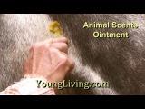 Young Living - Animal Scents Products. Эфирные масла для животных.
