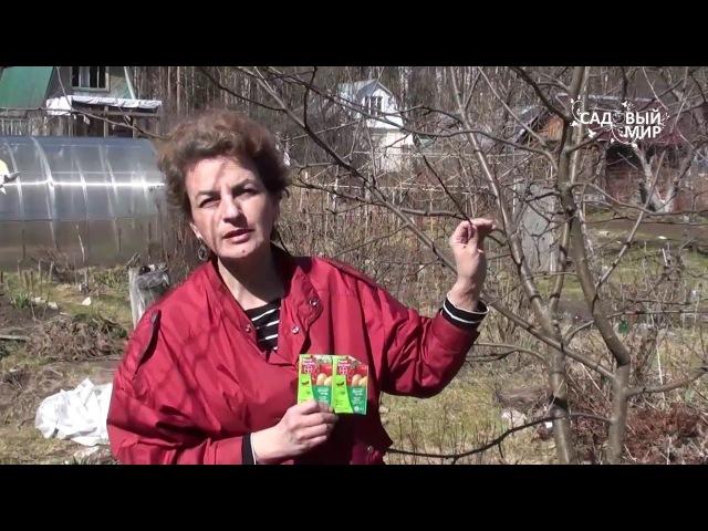 Чем обработать яблони от насекомых вредителей Препарат Децис Профи