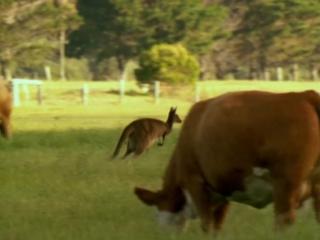 Дикая Австралазия (2003)