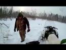 Охота на бобра капканами зимой _ 10 советов