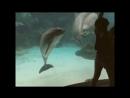 Контакт дельфина и человека