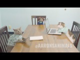Cats in the Workplace - Aaron's Animals
